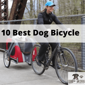 Best Dog Bicycle