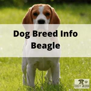 Dog Breed Info Beagle