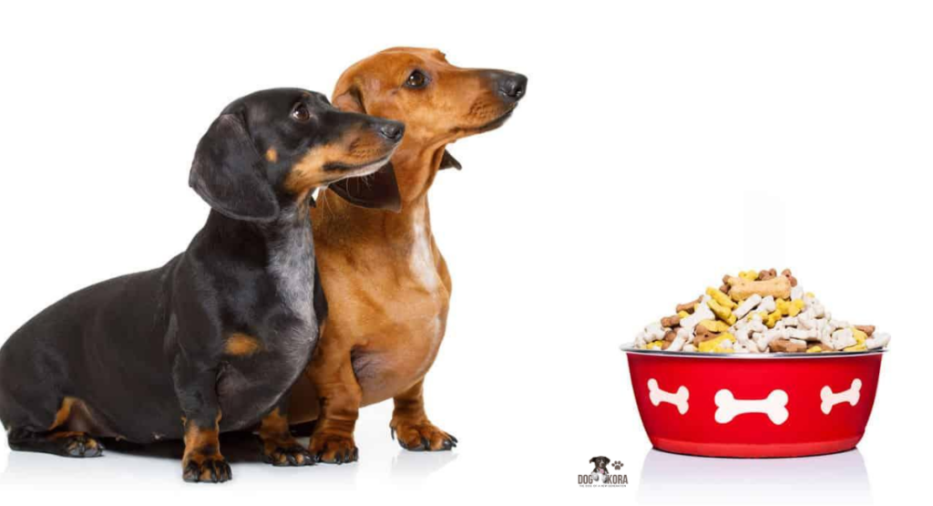 best dog food for dachshunds with skin allergies