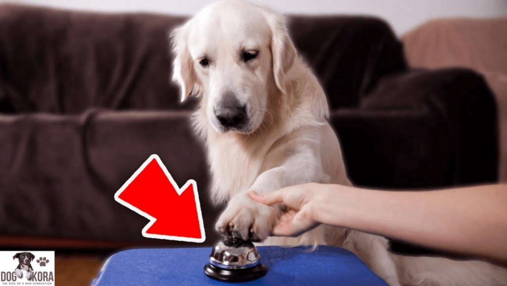 how to teach a dog to ring a service bell
