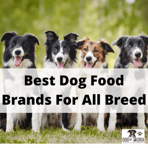 Best Dog Food Brand