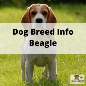 Dog Breed Info Beagle