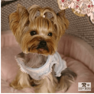 best wet dog food for yorkies