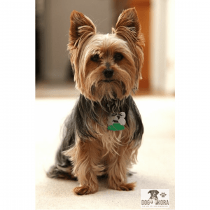 best dog food for yorkies with allergies