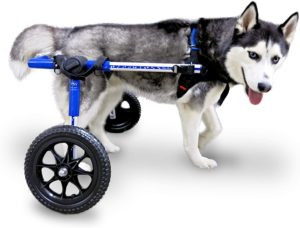 Walkin' Wheels Dog Wheelchair for Medium Large Dogs 50-69 Pounds